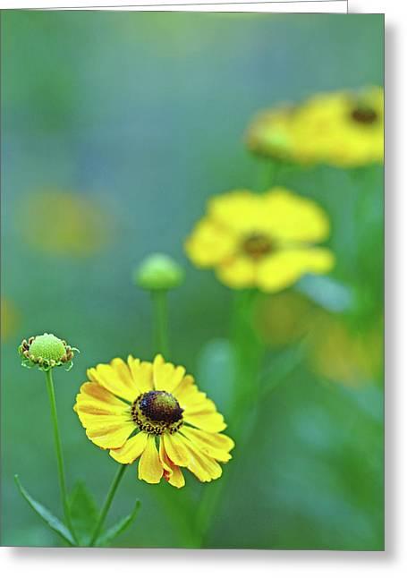 Swamp Sunflower Greeting Card by Debbie Oppermann