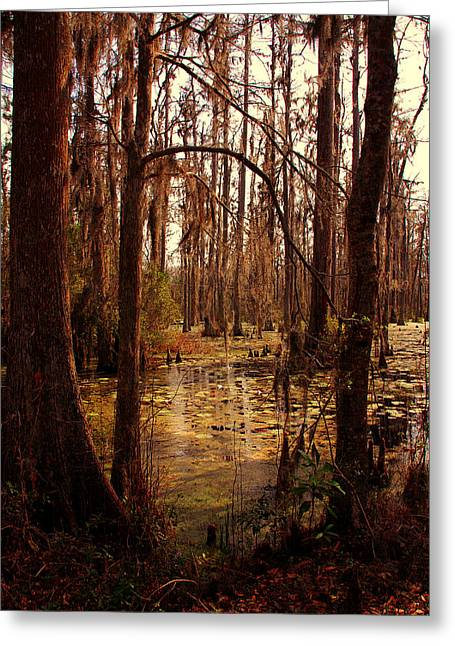 Swamp Greeting Card by Susanne Van Hulst