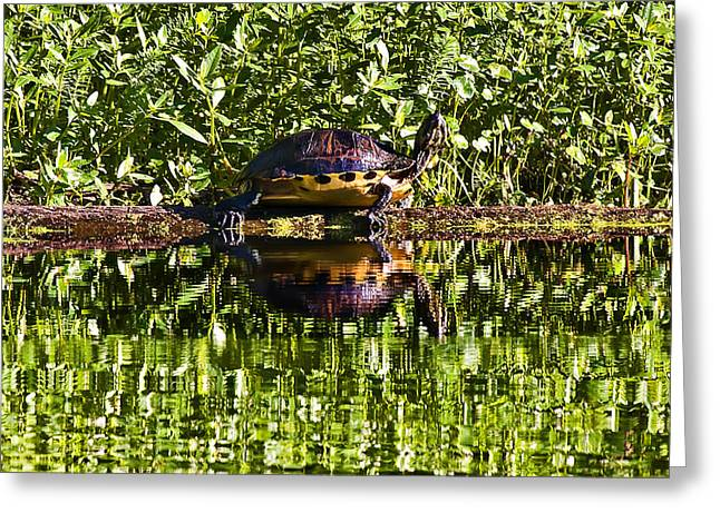 Swamp Turtle Sunning On A Log Greeting Card by Michael Whitaker