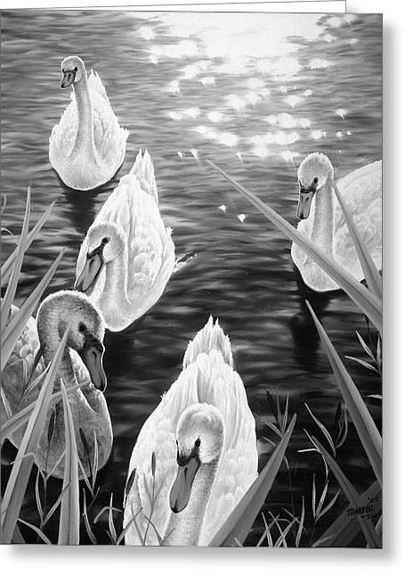 Swan 2 Greeting Card