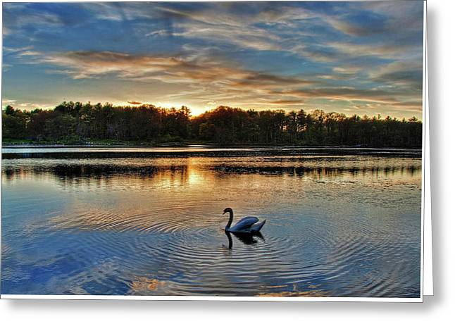 Swan At Sunset Greeting Card
