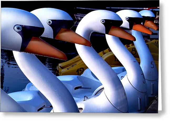 Swan Boats Greeting Card by Robert Lacy