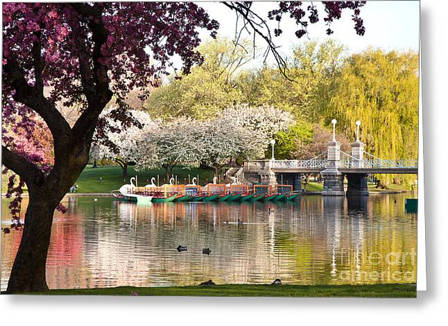 Swan Boats With Apple Blossoms Greeting Card