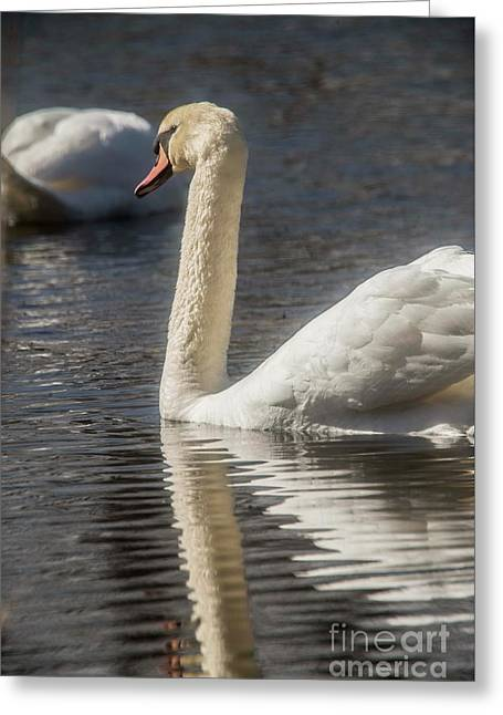 Greeting Card featuring the photograph Swan by David Bearden