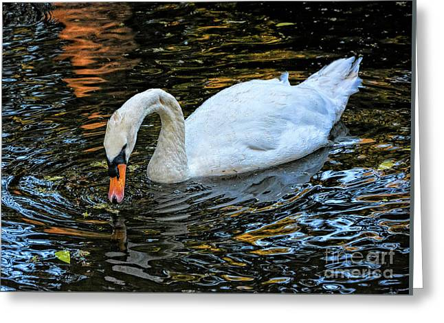 Swan Drinking Water Greeting Card by Stephan Grixti