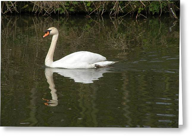 Swan Facing Left Greeting Card by Shannon Labout