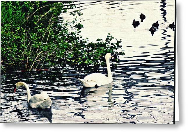 Swan Family On The Rhine 2 Greeting Card