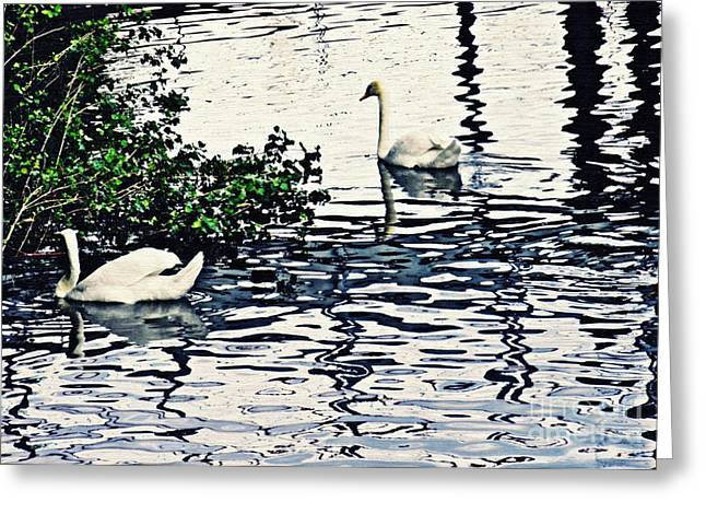 Swan Family On The Rhine 3 Greeting Card