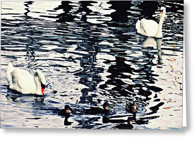Swan Family On The Rhine Greeting Card