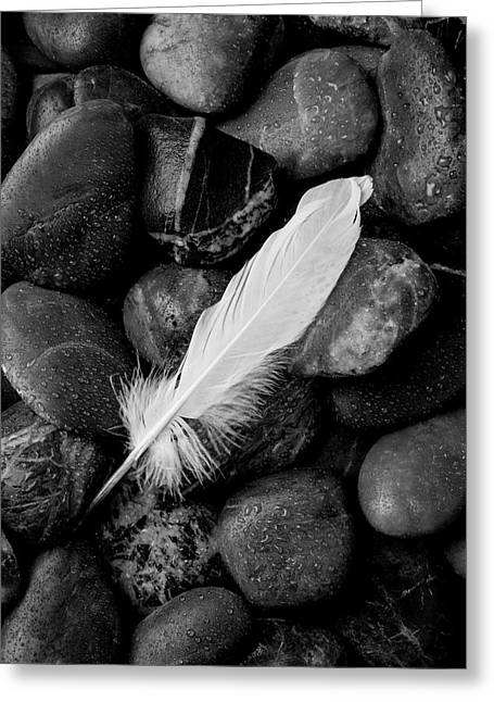 Swan Feather Black And White Greeting Card by Garry Gay