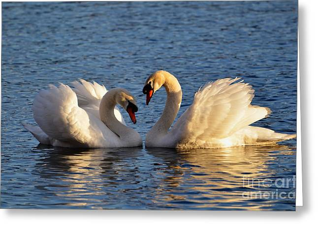 Swan Heart Greeting Card by Mats Silvan