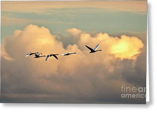 Greeting Card featuring the photograph Swan Heaven by DJA Images