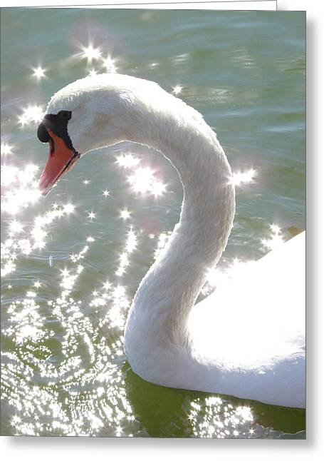 Swan II Greeting Card