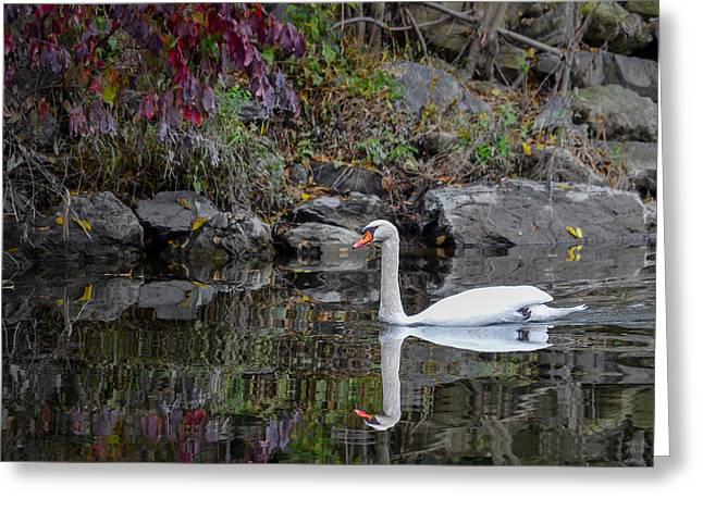 Swan In Autumn Reflections Greeting Card