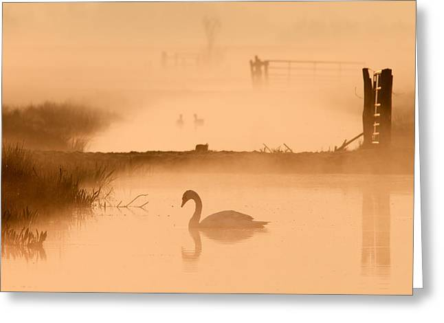 Swan In The Mist Greeting Card by Roeselien Raimond