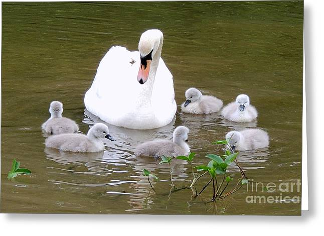 Swan Lake 1 Greeting Card by Bill Holkham