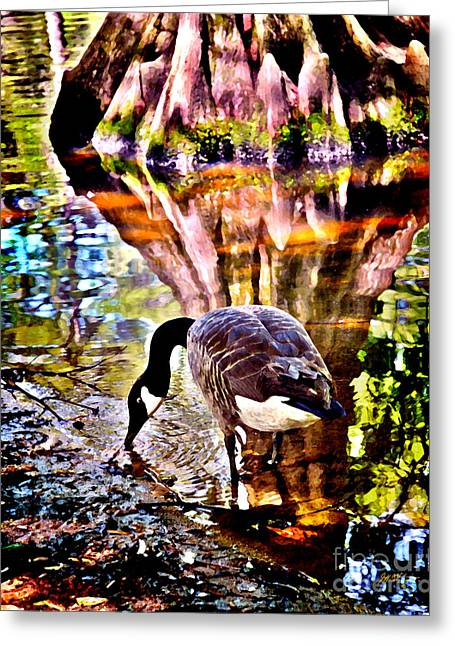 Swan Lake Canadian  Greeting Card by Jeff McJunkin