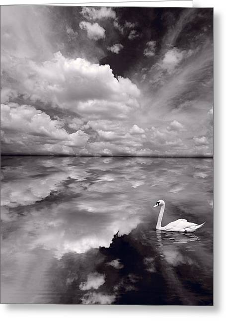 Swan Lake Explorations B W Greeting Card by Steve Gadomski