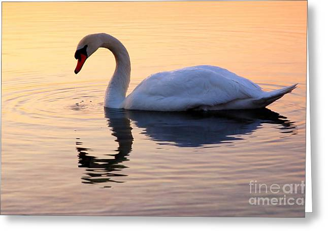 Swan Lake Greeting Card by Joe  Ng