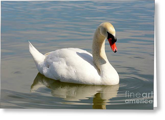 Swan Lake Morton Greeting Card