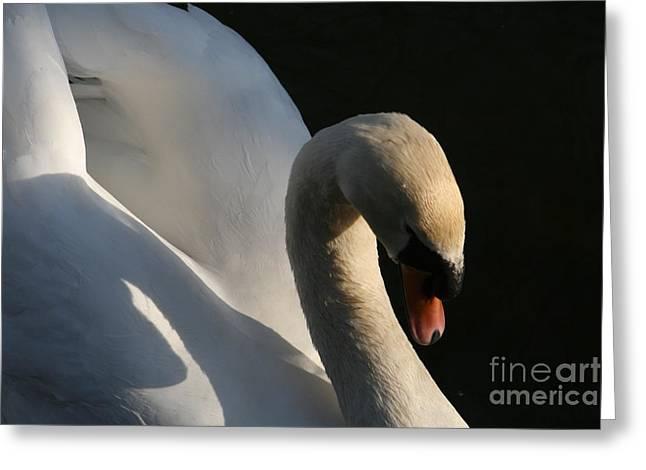 Swans... Greeting Cards - Swan Lake Story Greeting Card by Valia Bradshaw