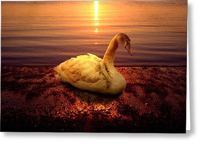 Swan Lake Greeting Card by Yuri Lev