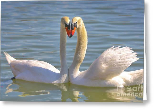 Swan Love Greeting Card by Carol Groenen