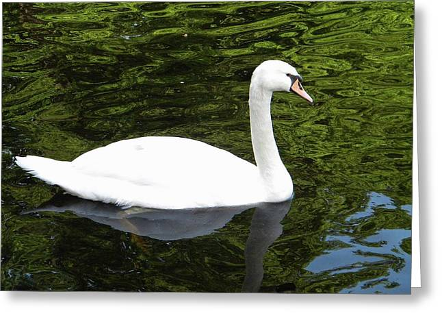Greeting Card featuring the photograph Swan by Manuela Constantin