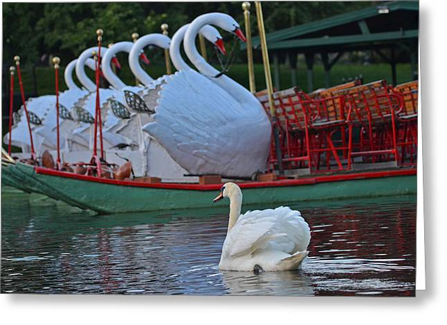 Swan Meeting Up With Some Friends Greeting Card by Toby McGuire