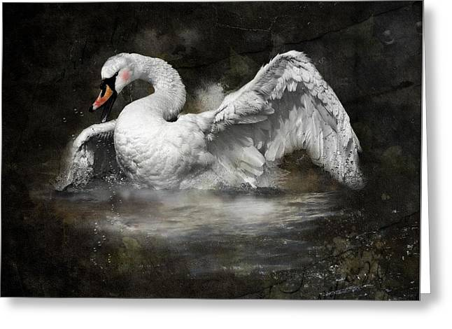 Swan Mystery Greeting Card