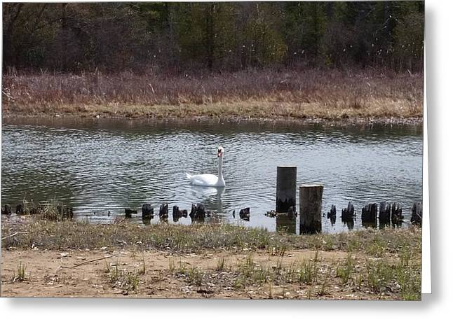 Swan Of Crooked River Greeting Card by Wendy Shoults