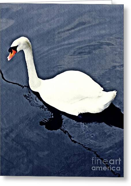 Swan On The Rhine Greeting Card