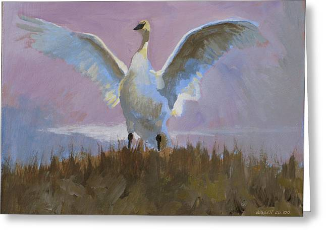 Swan Greeting Card by Robert Bissett