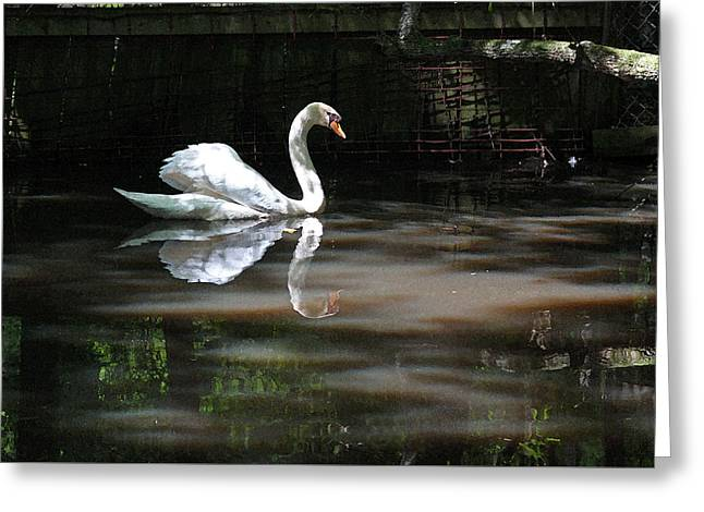 Swan Series I Greeting Card by Suzanne Gaff