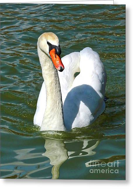 Swan Swirls Greeting Card