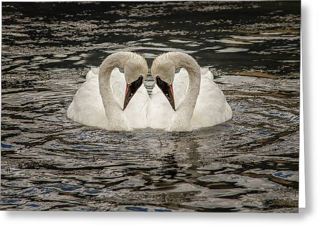 Swan Times Two Greeting Card by Mary Hone