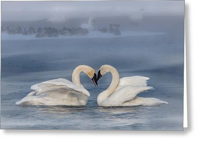 Swan Valentine - Blue Greeting Card