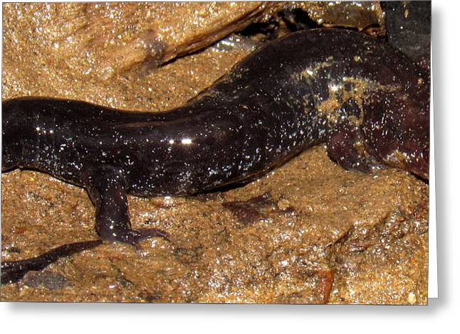 Swannanoa Salamander Greeting Card by Joshua Bales