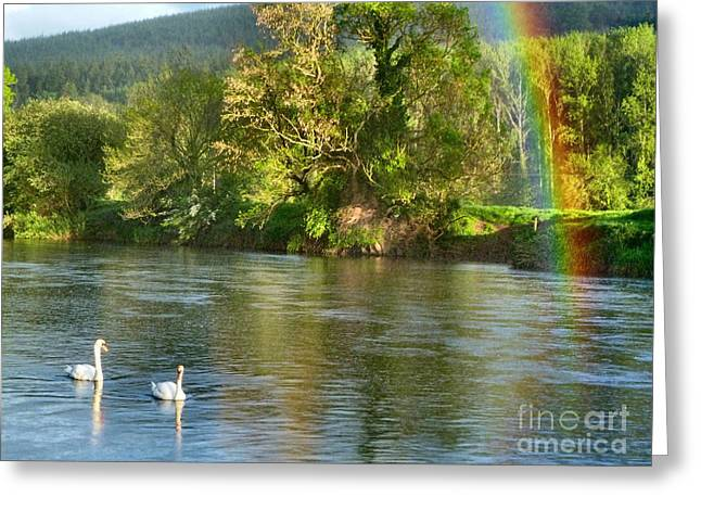 Swans And Double Rainbow 1 Greeting Card