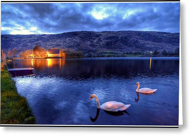Swans At Gougane Barra Greeting Card by Joe Ormonde