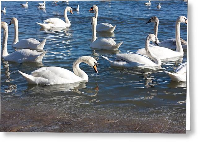 Swans Greeting Card by Boyan Dimitrov