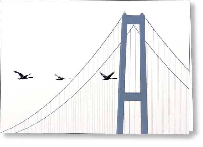 Swans In Line Greeting Card by Toon De Zwart