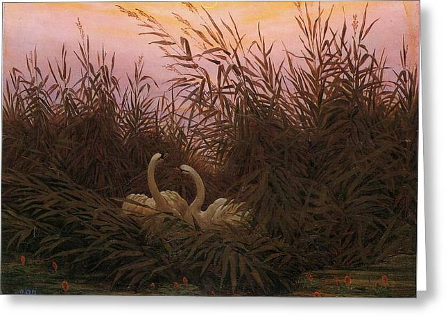 Swans In The Reeds At Dawn Greeting Card