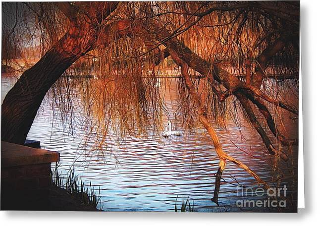 Greeting Card featuring the photograph Swans On The Avon by Sue Melvin