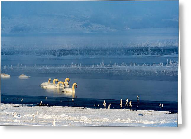 Swans On The Lake Greeting Card