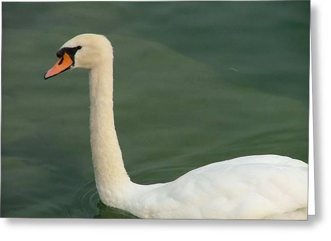 Swan's Portrait Greeting Card by Rita Fetisov