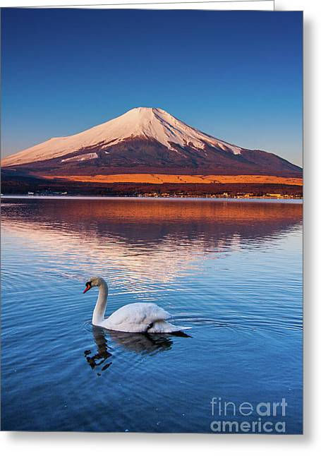 Greeting Card featuring the photograph Swany by Tatsuya Atarashi