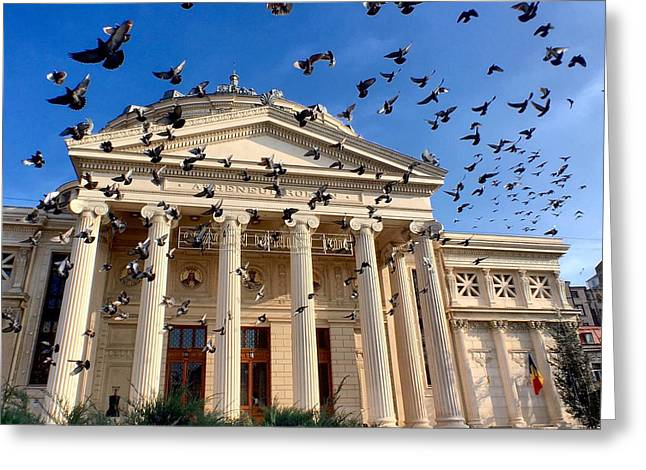 Greeting Card featuring the photograph Pigeon Swarm At The Ateneul Roman In Bucharest, Romania by Chris Feichtner