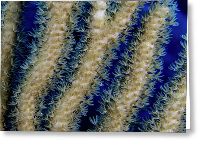 Swaying Coral Polyps Greeting Card
