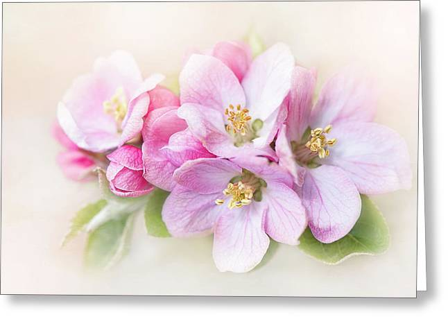 Sweet Apple Blossom Greeting Card by Jacky Parker
